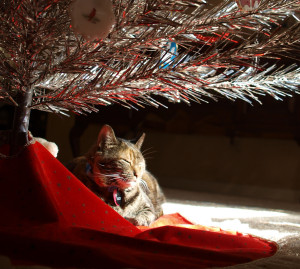 Xmas Cat by Oliver Beckstei