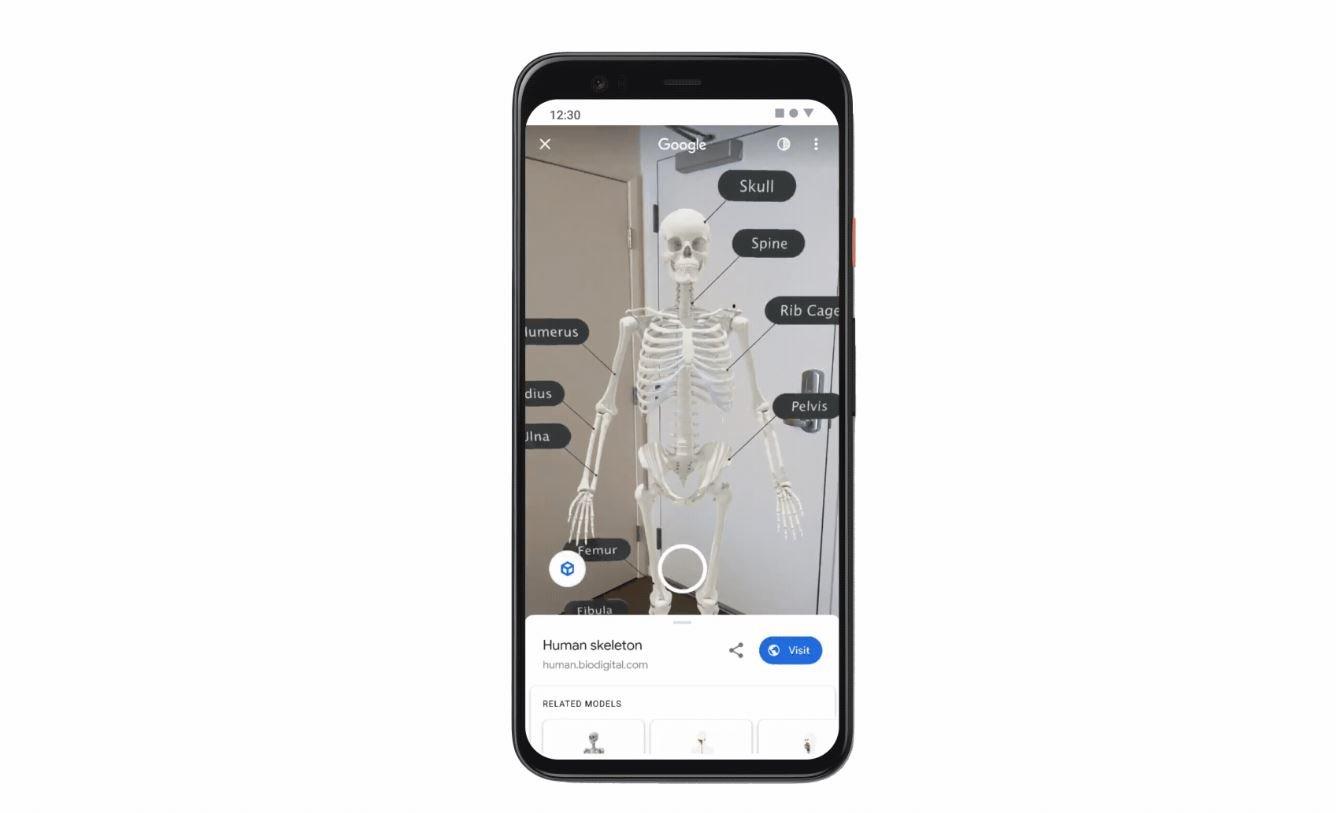 google ar skelett