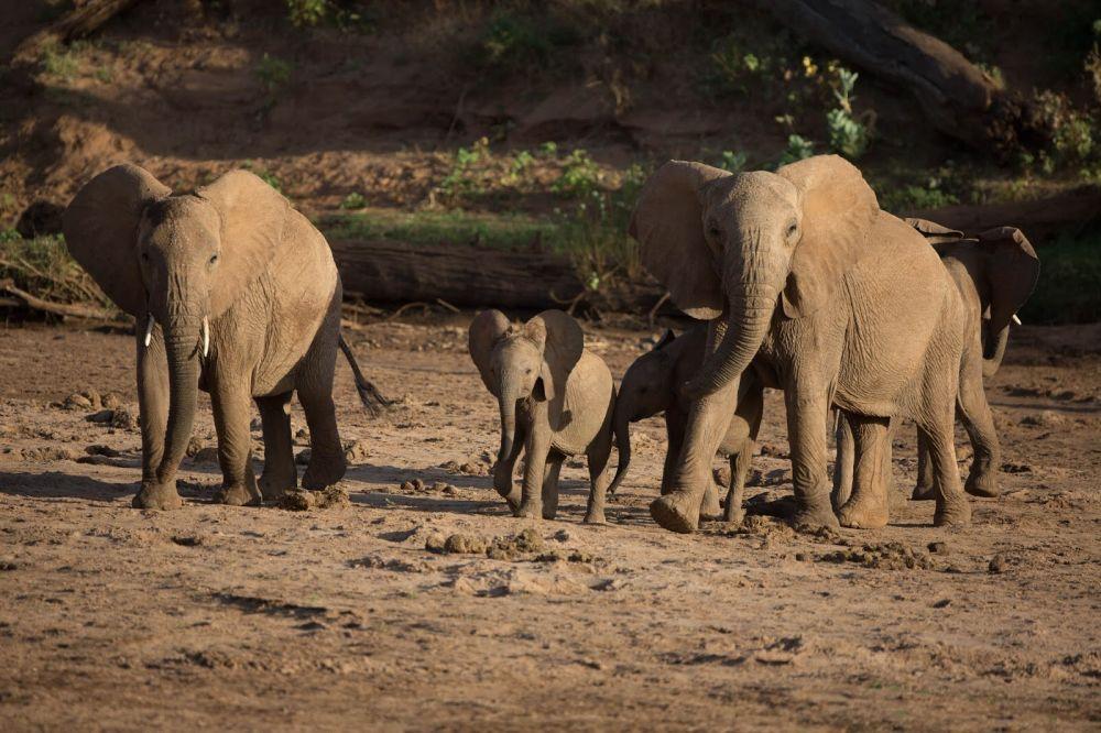 google earth 7 elefanten