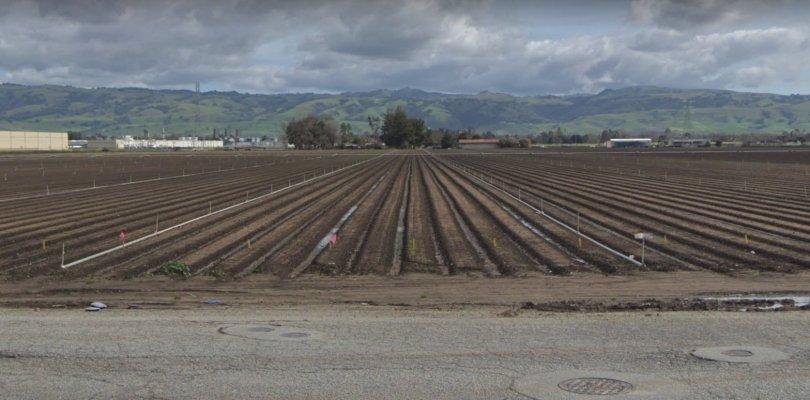 google green tree farm