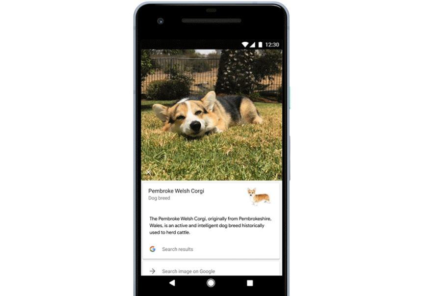 google lens hund rasse