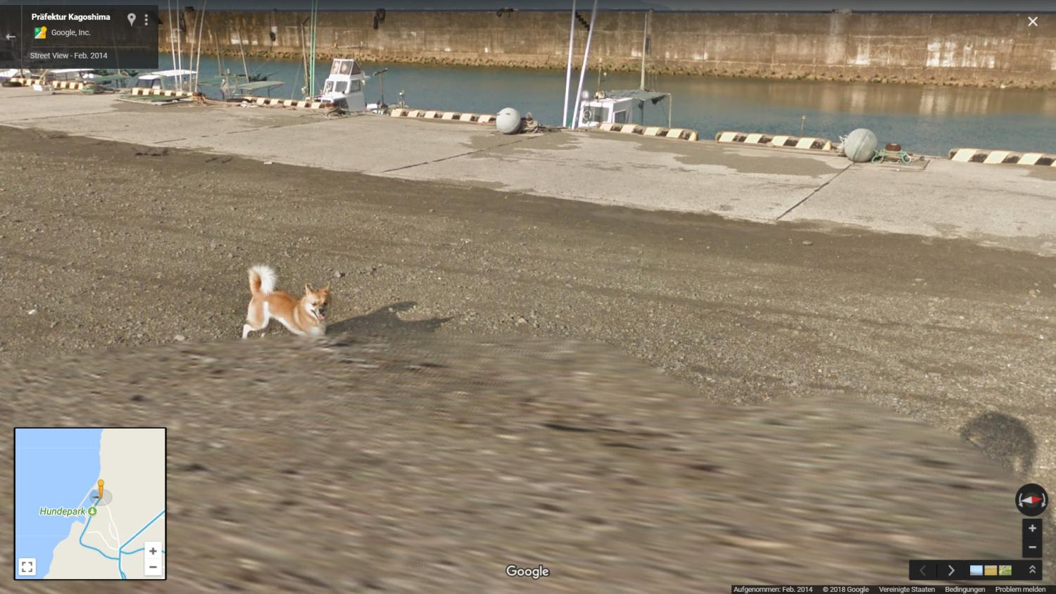 google maps streetview dog