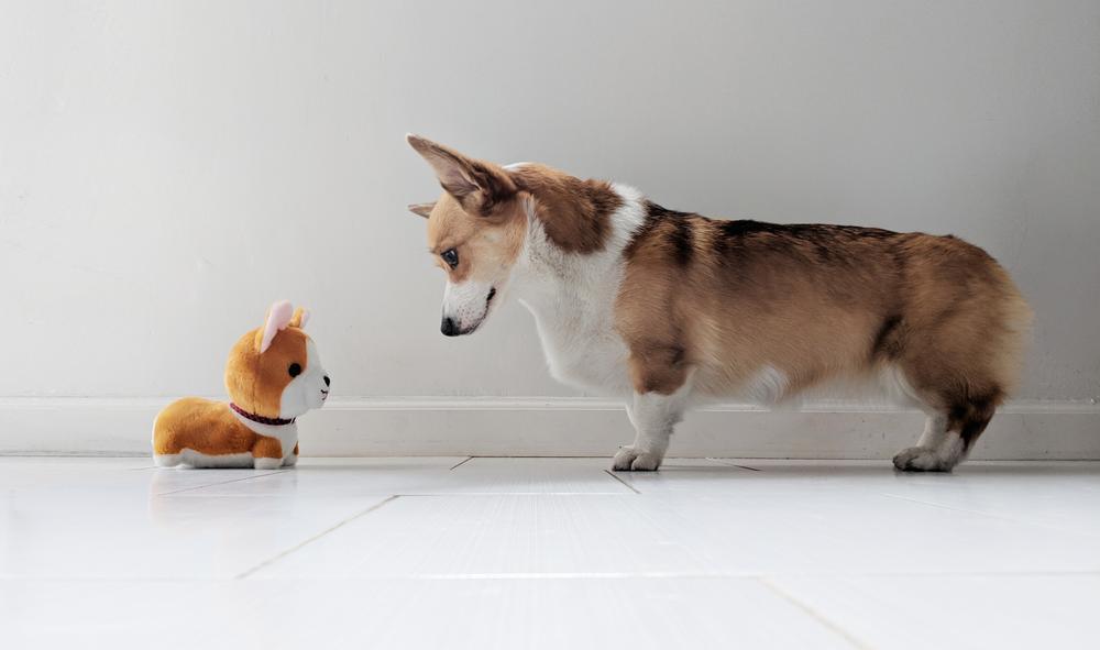 hund perspektive