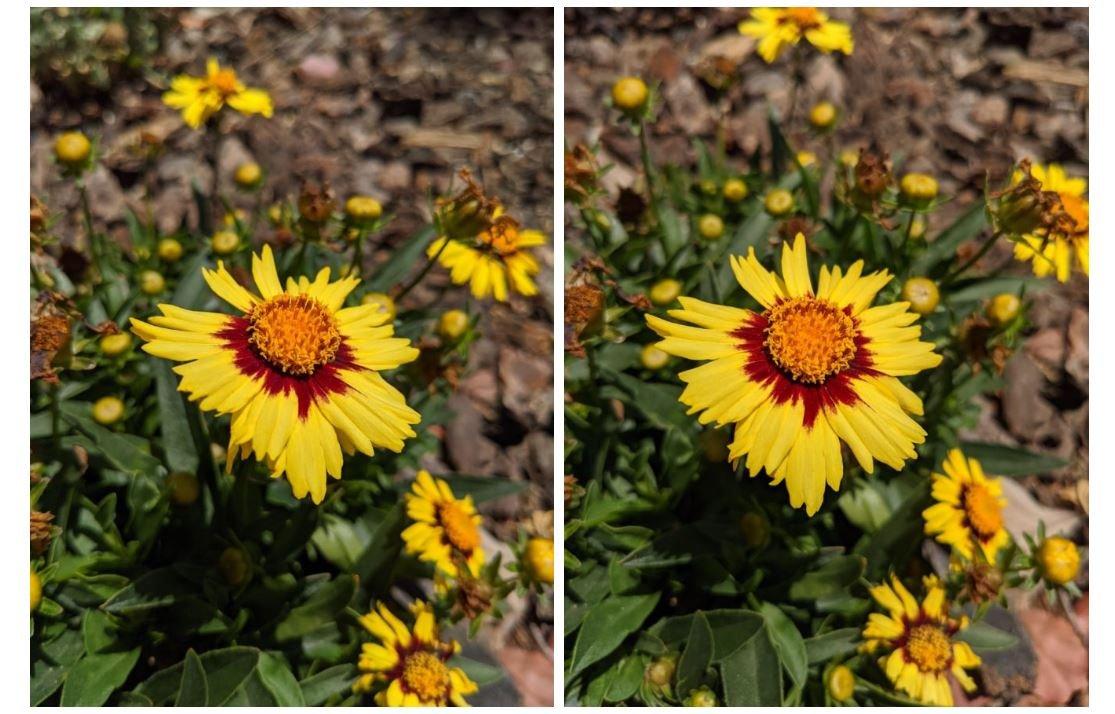 pixel 4 vs pixel 4a camera 6
