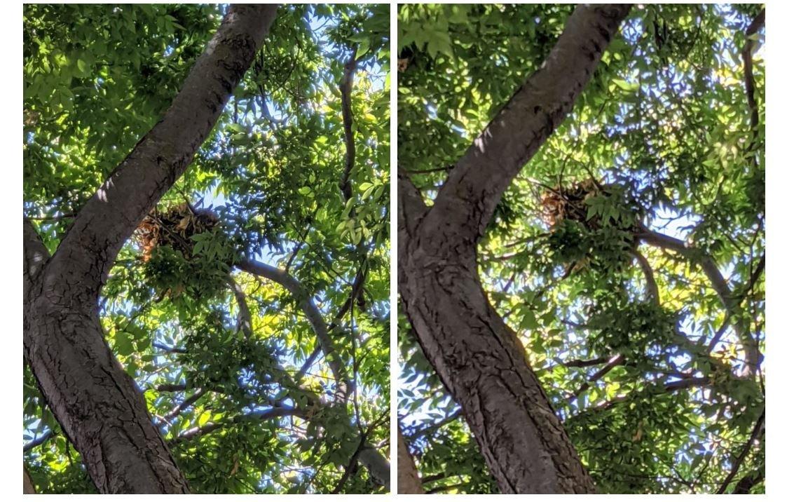 pixel 4 vs pixel 4a camera zoom 3